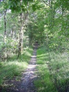 Sentier Bois Defend-3